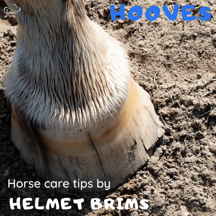 How to care for your horses hooves in the dry hot conditions
