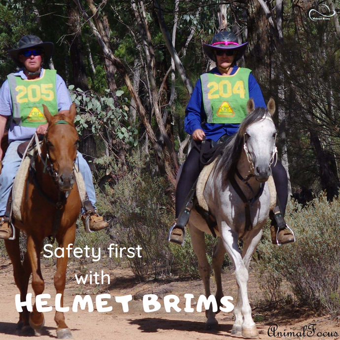 Which horse riding helmet is safest?
