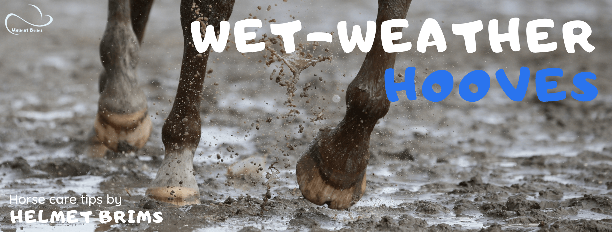 Wet weather hoof care for horses fungus mould thrush treatment