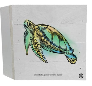 Sea Turtle White Box