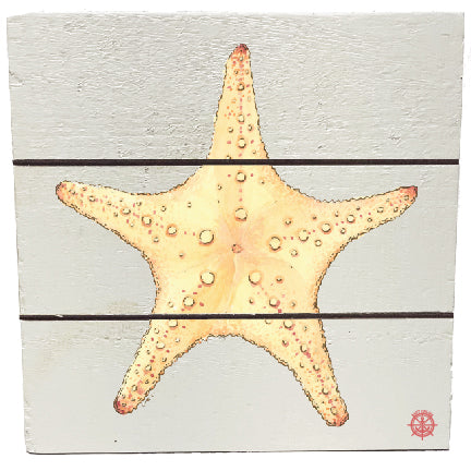 Coastal Starfish Wall Decor