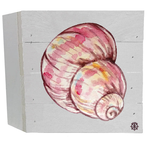 Seashell White Box