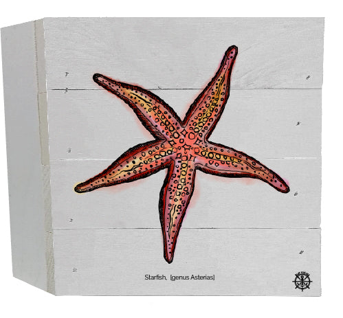 Starfish White Box