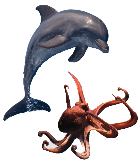 A dolphin and octopus