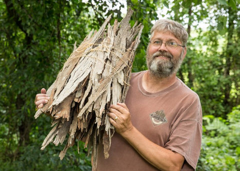 Hickory shag bark being harvested by Travis Miller of Falling Bark Farms Hickory Syrup
