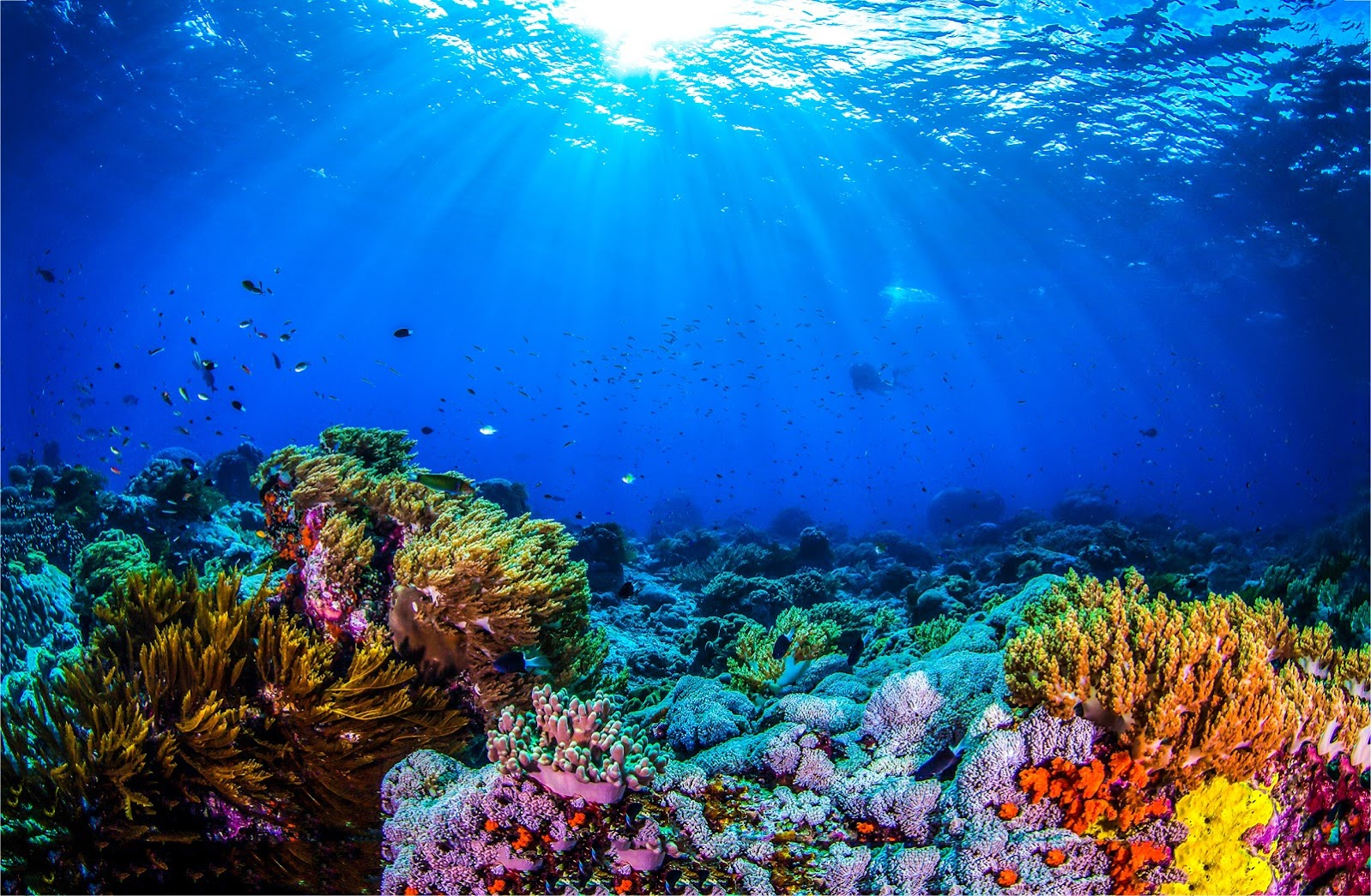 Saving Our Coral Reefs