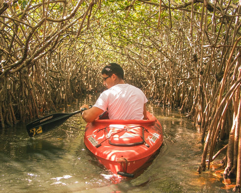 kayak, mangroves, flroida keys