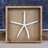 bonbon shadowbox with starfish