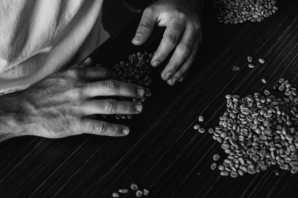 Takumi of Brut coffee sorting green bean coffee by hand for Australian Coffee Roasting Championship 2019 in Melbourne