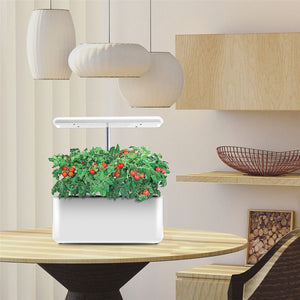 Ekko Green Indoor Hydroponic Grow Kit With LED Lights