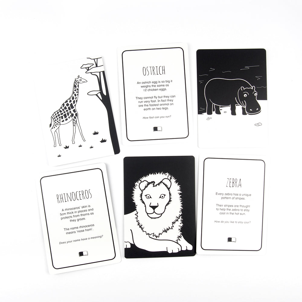 Children's | Spectacular Animals of Africa Flash cards