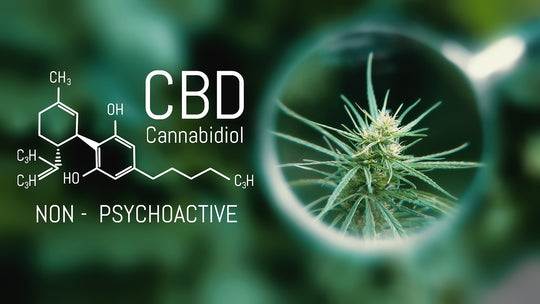 CBD for Dummies