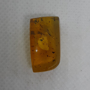 Chiapas amber with unique insect, 25 million years old.