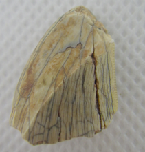 Load image into Gallery viewer, Afrovenator or Spinostropheus Tooth, extremely rare, 0.74""
