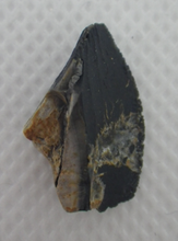 Load image into Gallery viewer, Ceratopsian Tooth, Aguja Formation, Texas