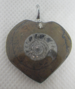 Fossil Ammonite Necklace Pendant