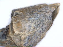 Load image into Gallery viewer, Partial Tyrannosaur Tooth