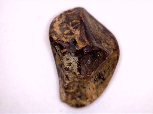 Triceratops Tooth, Lance Formation Wyoming