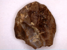 Load image into Gallery viewer, Triceratops Tooth, Lance Formation Wyoming