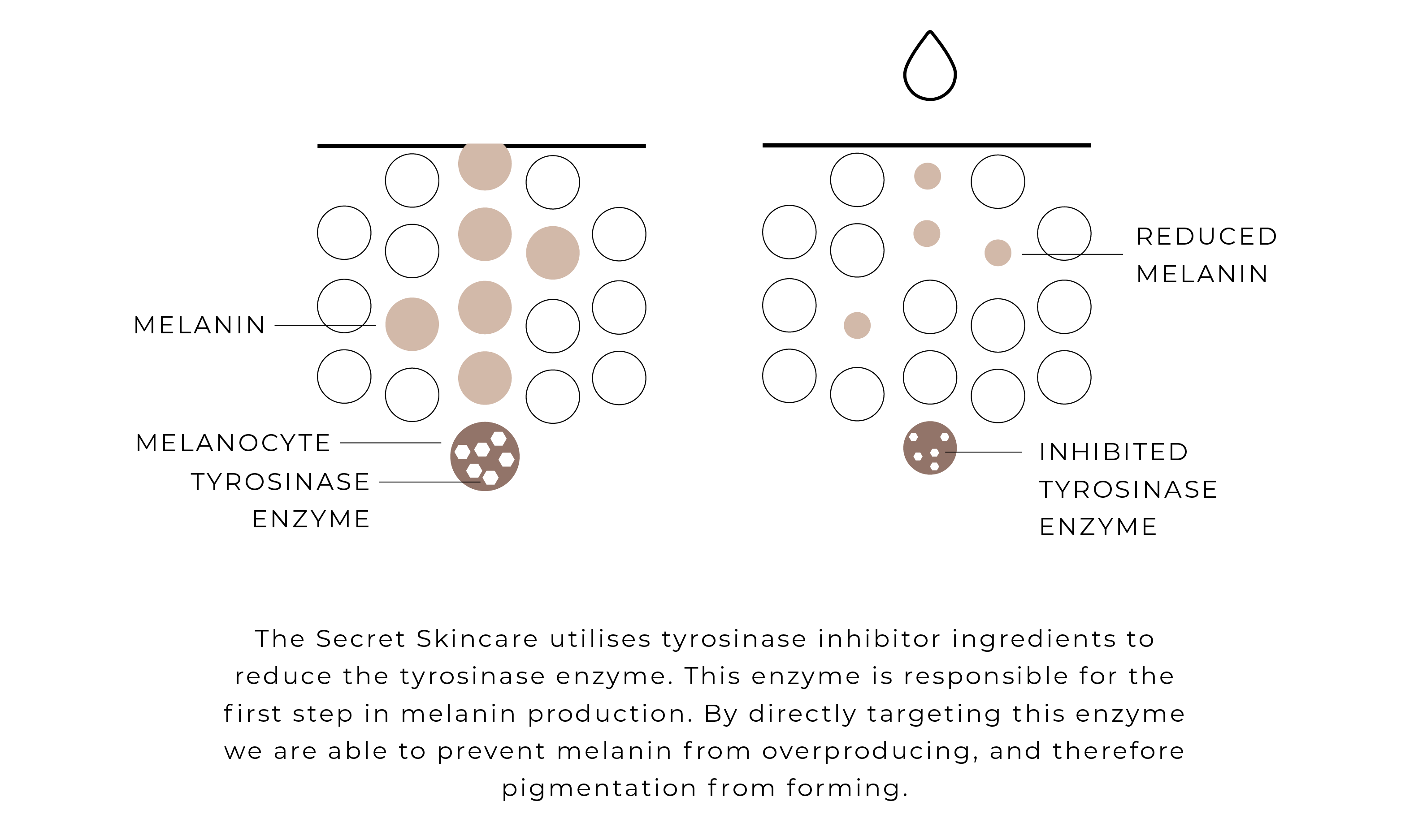 A diagram by The Secret Skincare showing the differences between slow cell turnover and rapid cell turnover of skin showing pigment.