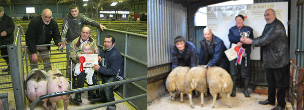 Wharfedale Farmers Auction