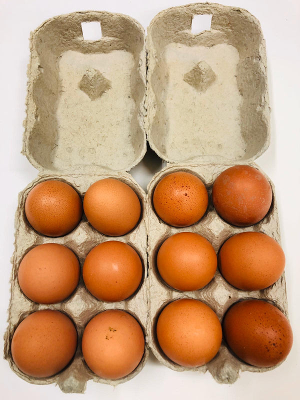 Tray of 12 Free Range Eggs