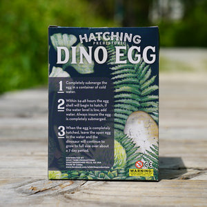 Hatching Dino Egg:  2 Pack.  Yes - this is the price for two eggs.