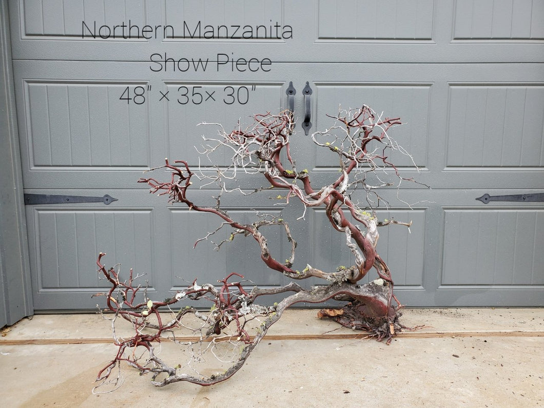 Northern Manzanita Wood Show Piece #3 (Contact me before purchasing)