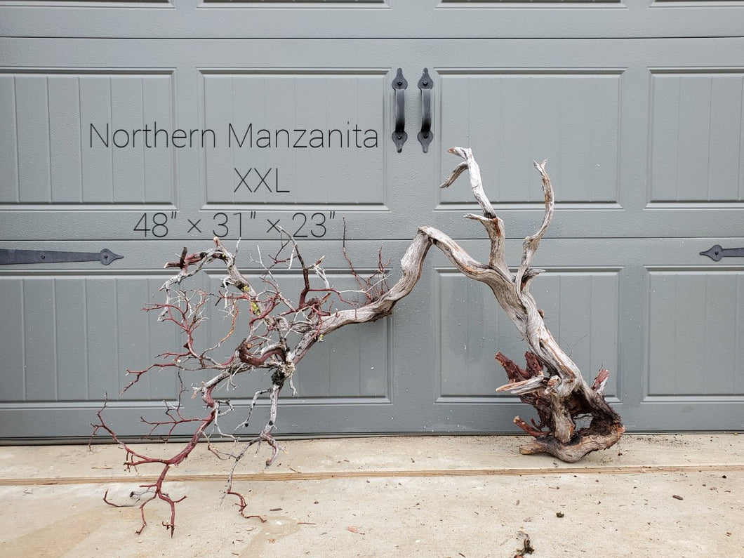 Northern Manzanita Wood XXL#11(Contact me before purchasing)