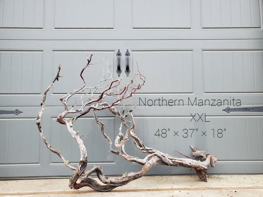Northern Manzanita Wood XXL#10 (Contact me before purchasing)