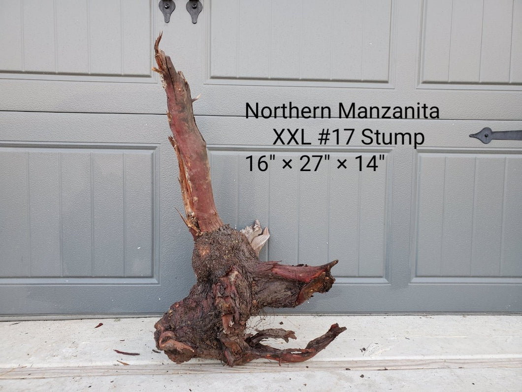 Northern Manzanita Wood XXL#17 Stump