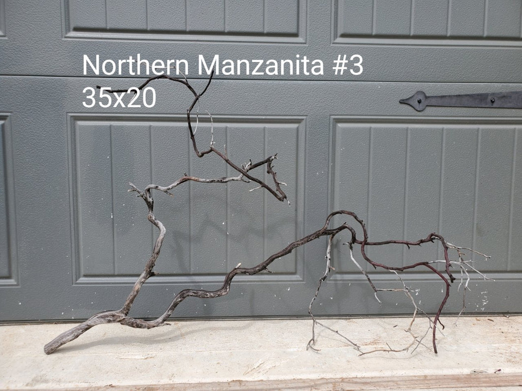 Northern Manzanita Wood #03