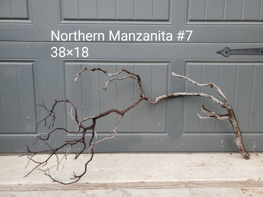 Northern Manzanita Wood #07