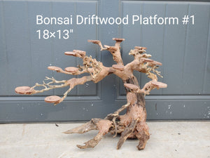 "Discounted Bonsai Driftwood Rainforest 18"" #01"
