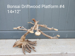 "Bonsai Driftwood Rainforest 12"" #04"