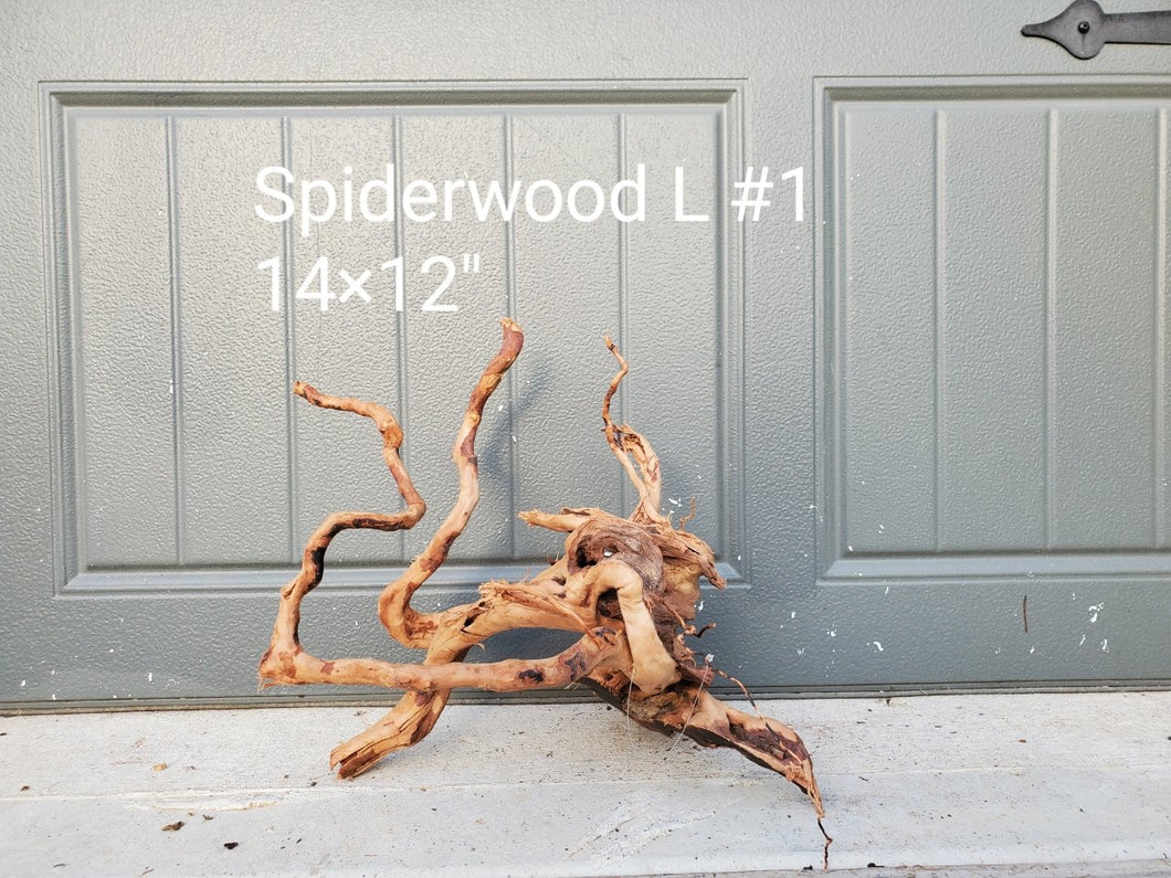 Spiderwood L #01