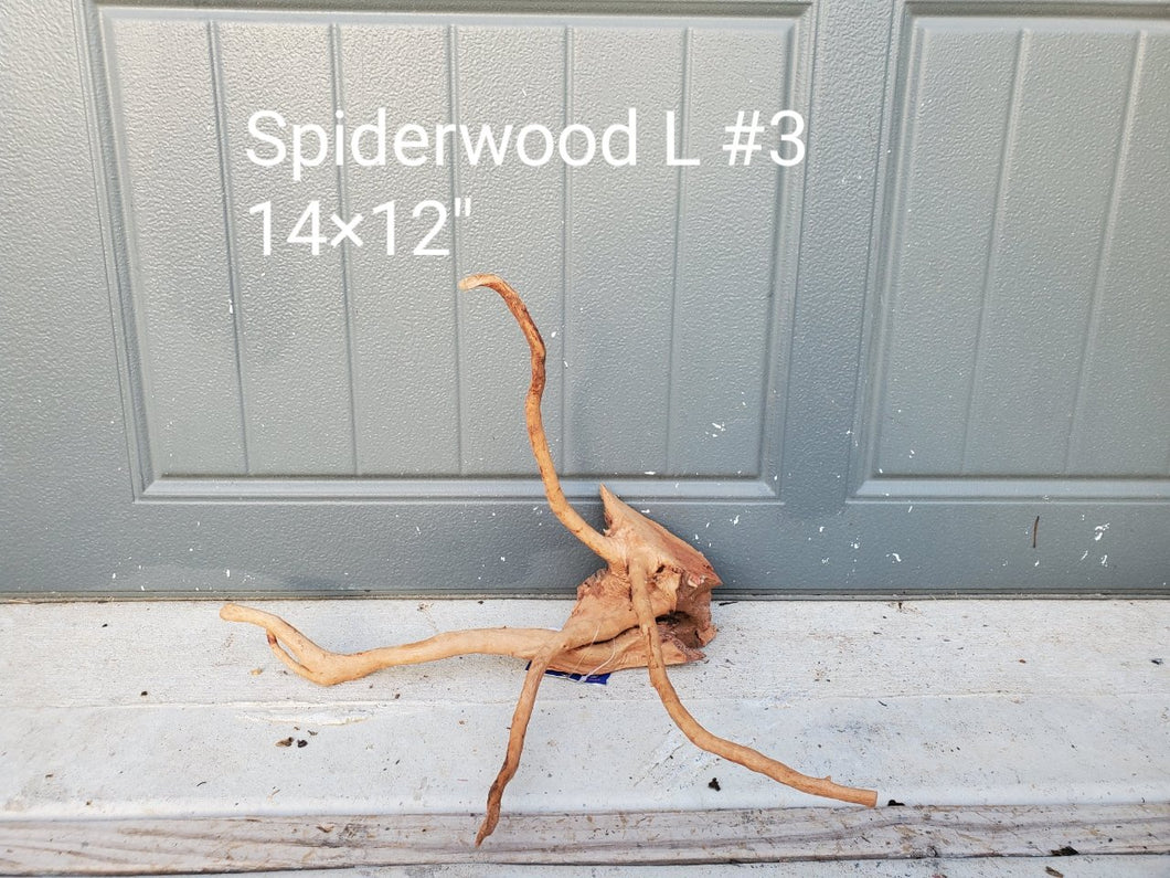 Spiderwood L #03