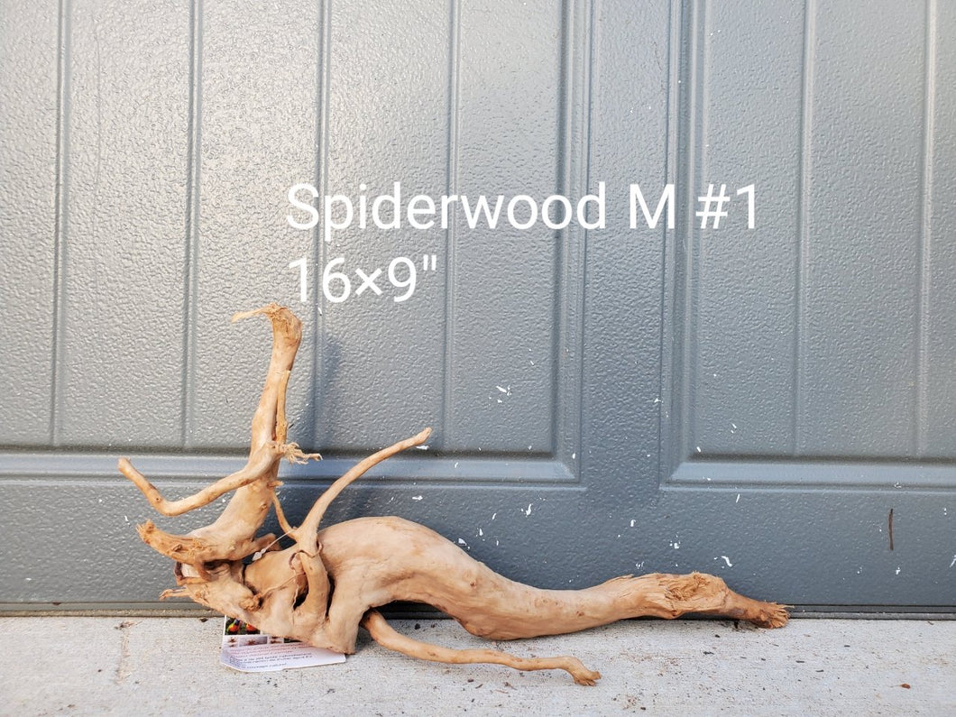 Spiderwood M #01