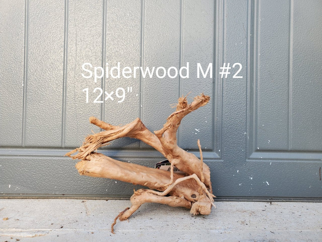 Spiderwood M #02