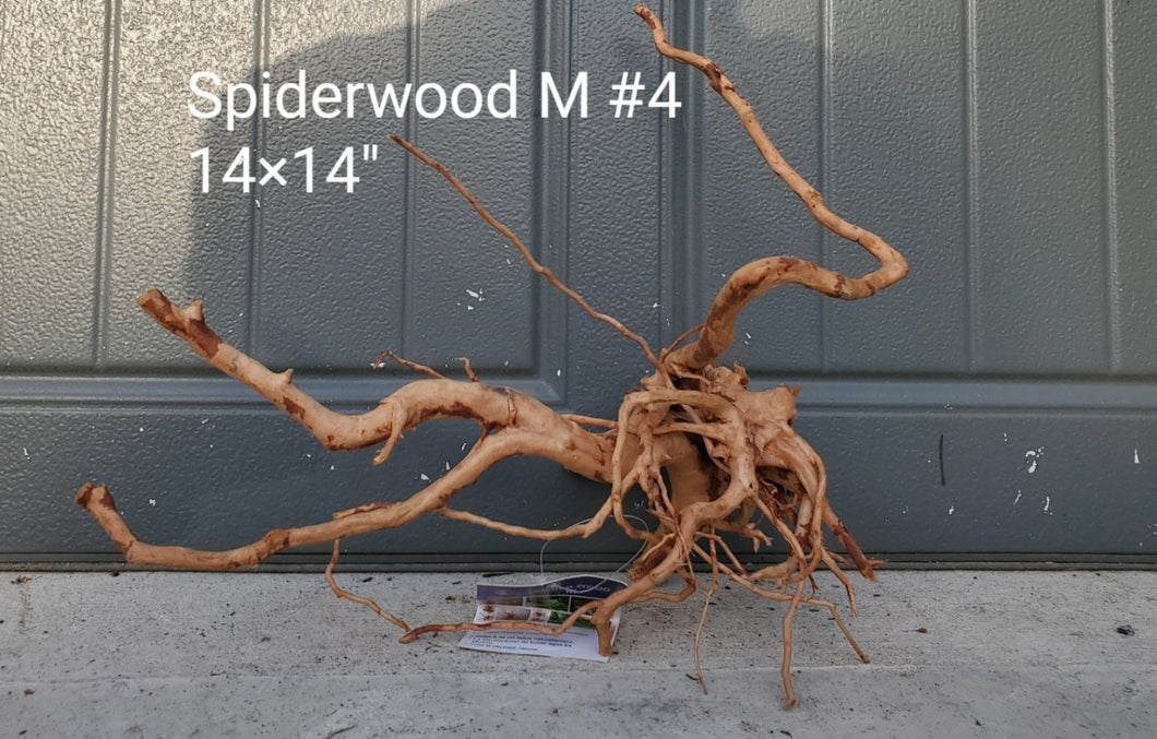 Spiderwood M #04