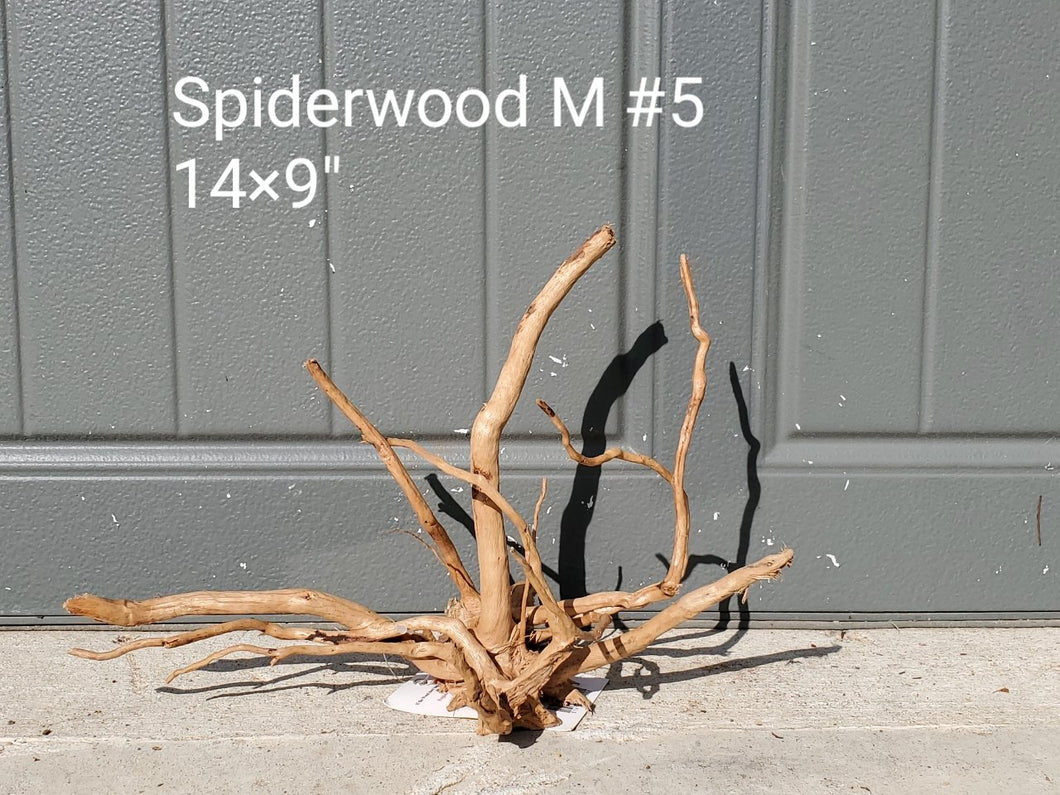 Spiderwood M #05