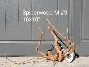 Spiderwood M #09