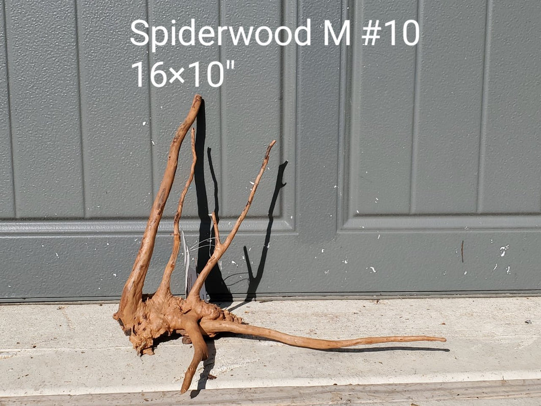 Spiderwood M #10