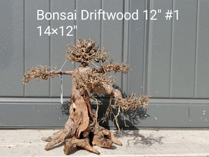 "Bonsai Driftwood 12"" #01"