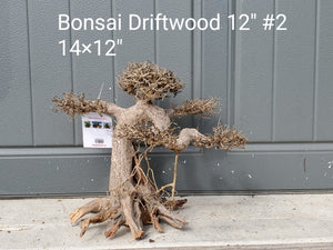 "Bonsai Driftwood 12"" #02"