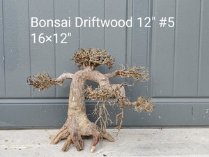 "Bonsai Driftwood 12"" #05"