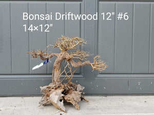 "Bonsai Driftwood 12"" #06"