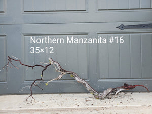 Northern Manzanita Wood #16
