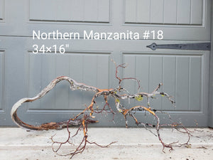 Northern Manzanita Wood #18