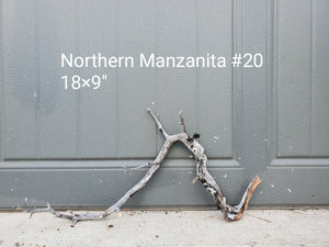 Northern Manzanita Wood #20